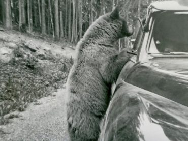 20 Vintage Photos of America's National Parks